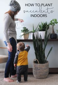 How to Plant Succulents Indoors | How to Plant Indoor Succulents | My Breezy Room