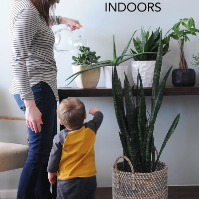 How to Plant Indoor Succulents