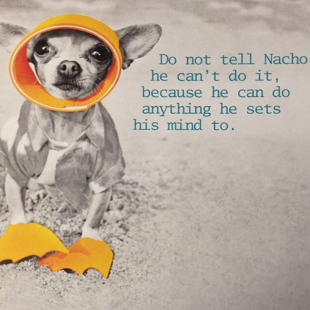 Nacho Can Do It