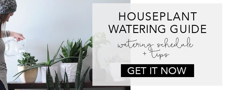 Houseplant watering schedule + tips