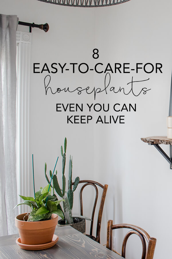 8 common house plants even you can keep alive! | My Breezy Room
