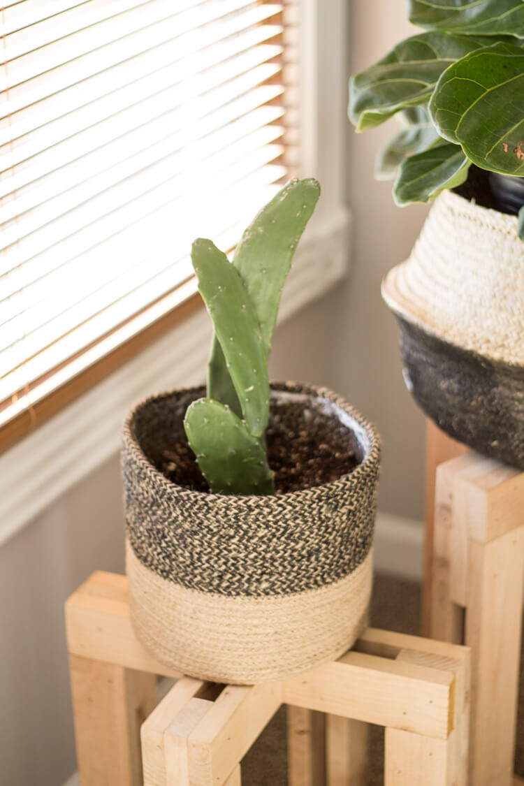 Best common house plants for beginners - 8 indoor houseplants you'll love including this prickly pear cactus! | My Breezy Room