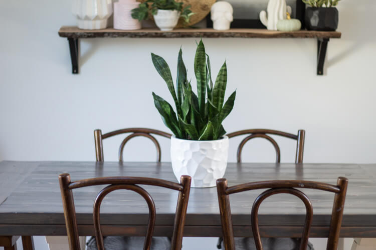 Common House Plants For Beginners My Breezy Room