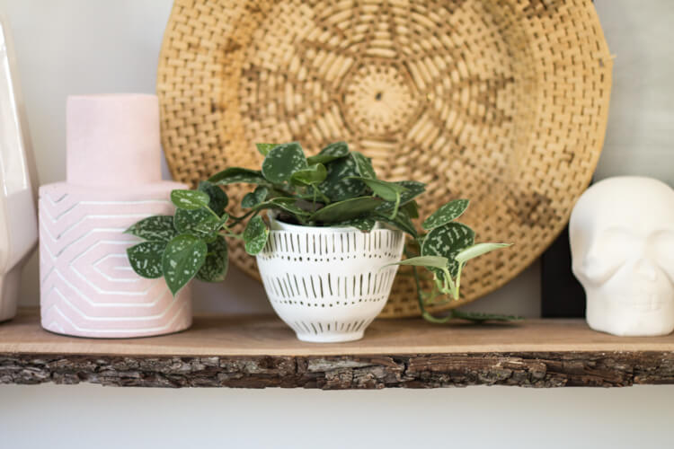 Best Houseplants for Beginners: 8 Plants You'll Love