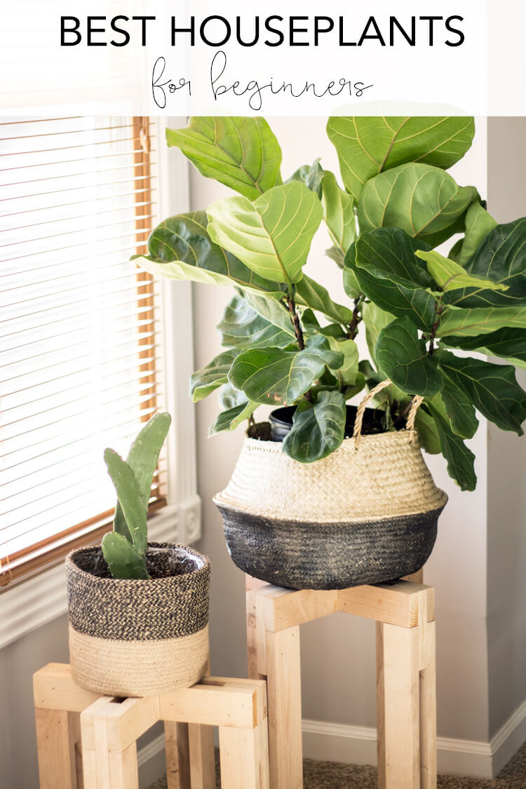 Best common house plants for beginners - 8 indoor houseplants you'll love! | My Breezy Room