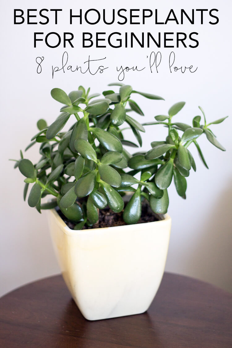 So I Rounded Up 8 Common House Plants That Think Are The Best Houseplants For Beginners Along With Some General Care Instructions Have Worked Well