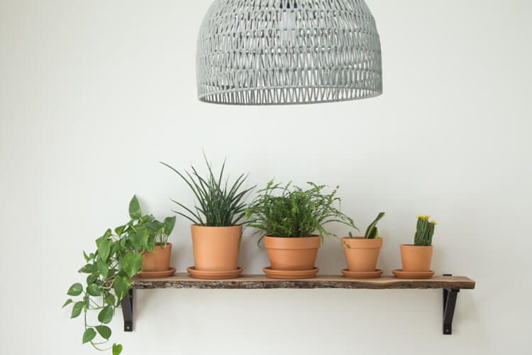 Simple plant shelf with 5 terra cotta planters filled with various houseplants.