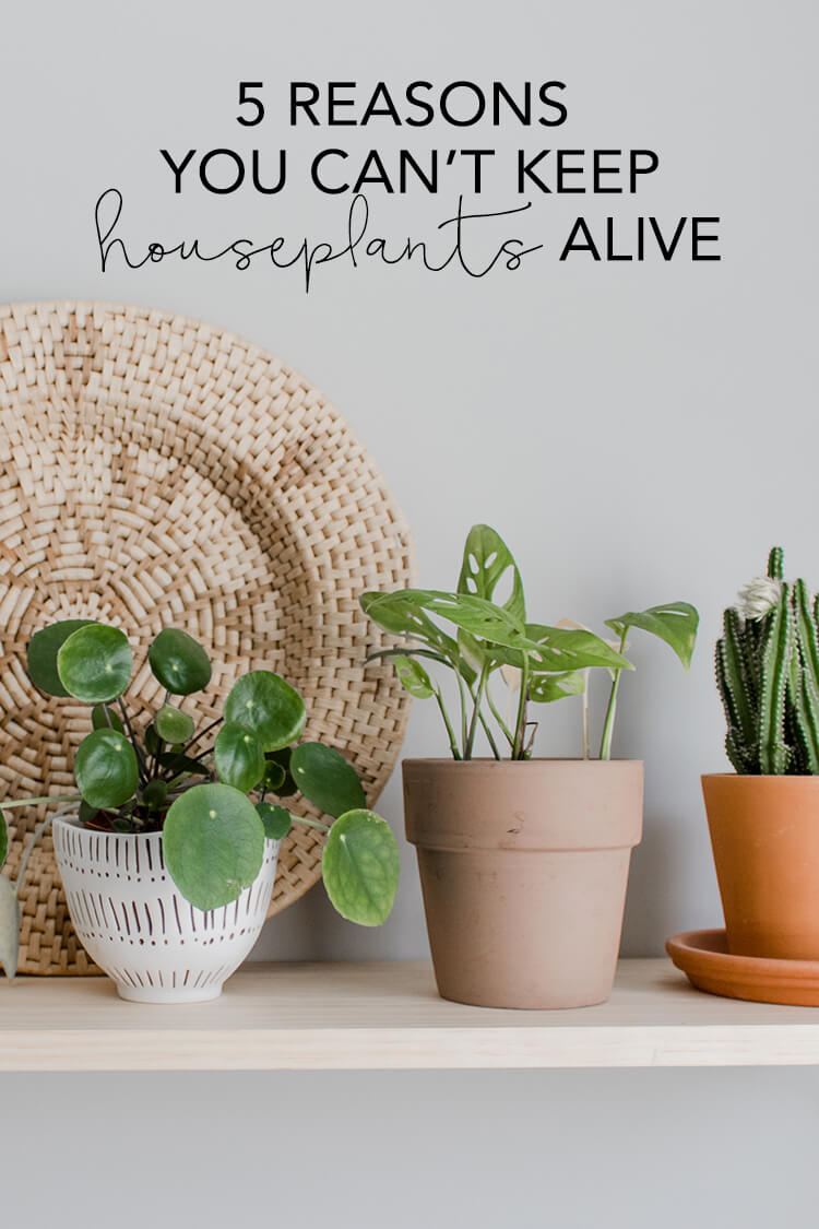 Pilea, swiss cheese vine and cactus on a shelf. 5 reasons your houseplants are dying. Use these 5 tips to help keep your plants alive.
