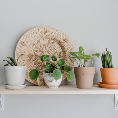 5 Reasons You Can't Keep Houseplants Alive