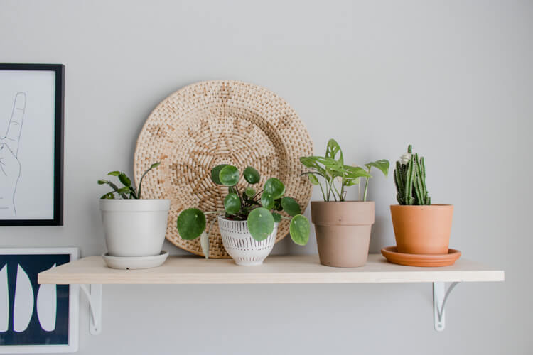 Cute little plant shelf with a 4 small plants in a assorted planters.