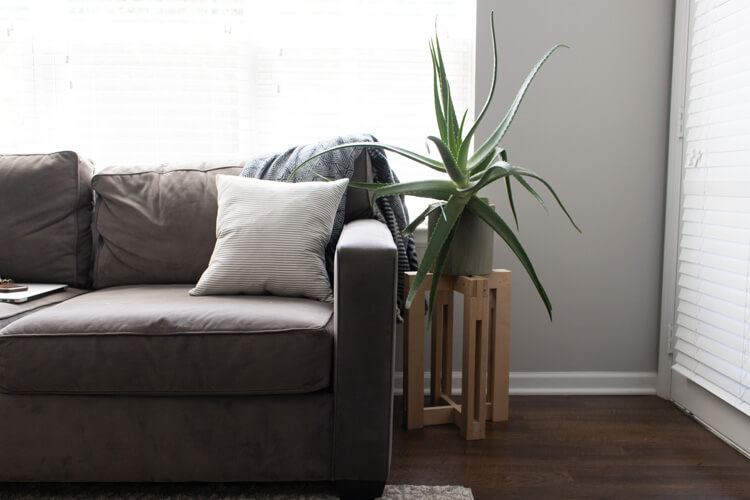 Large indoor aloe plant next to sofa. Use these 5 tips to keep houseplants alive.