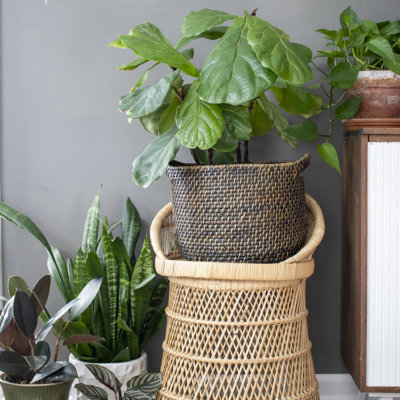 Why You Should Have a Plant in Every Room