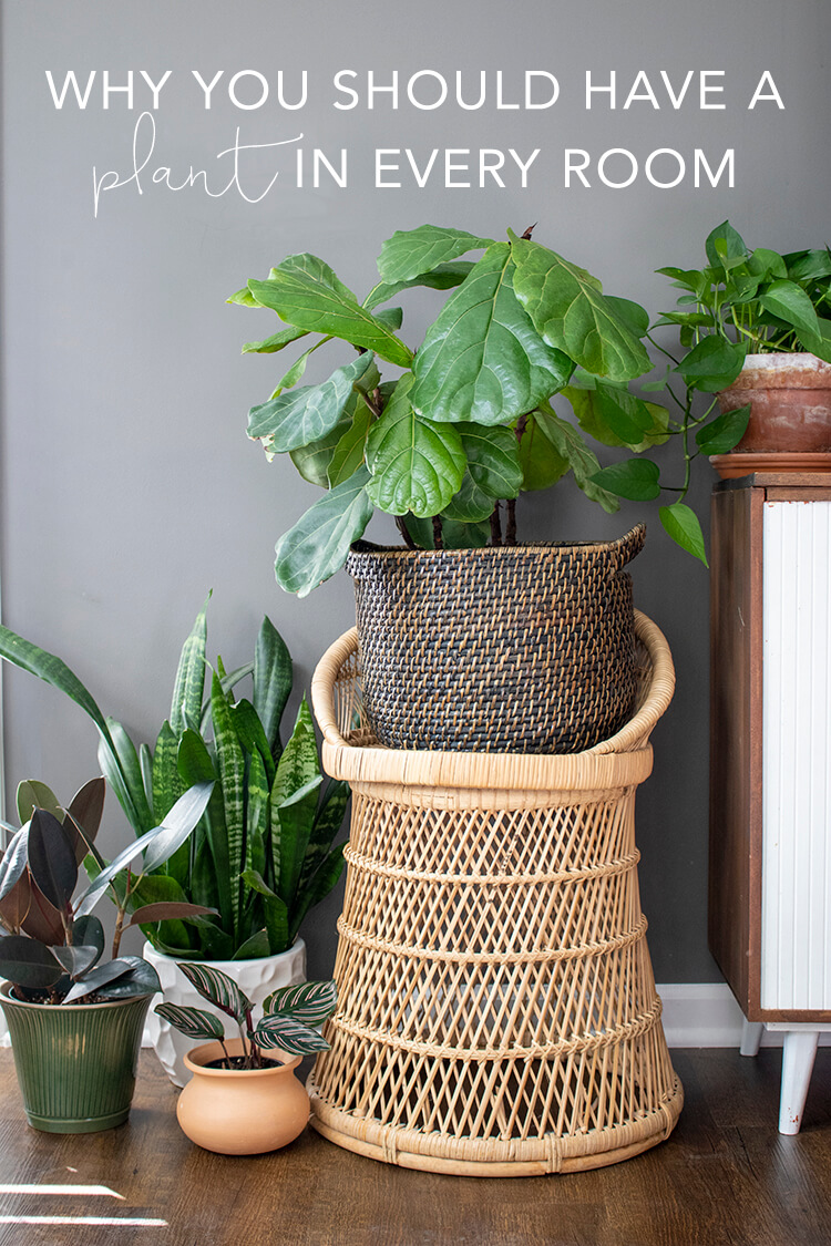 Why you should have a plant in every room | My Breezy Room